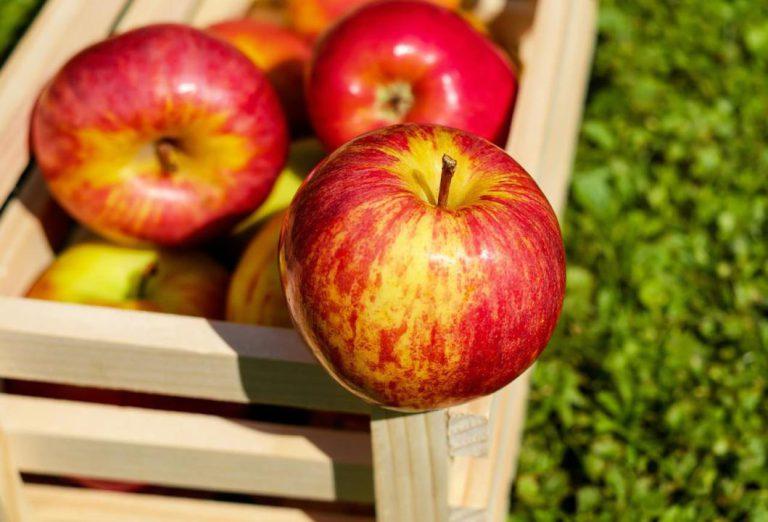 سیب و کوچک کردن شکم