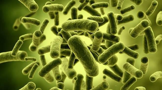 تغییرات در فلور طبیعی باکتری ها و چاقی