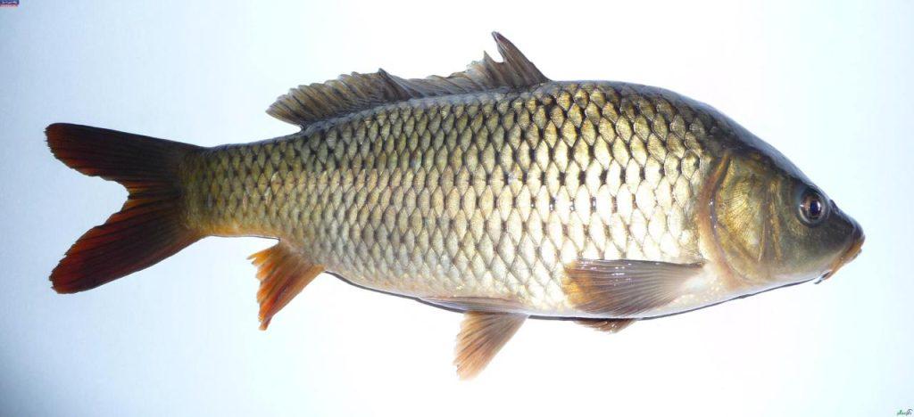 مصرف ماهی و جیوه