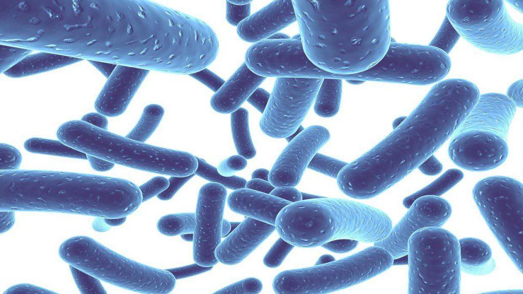 تاثیر پروبیوتیک ها بر سلامت و لاغری