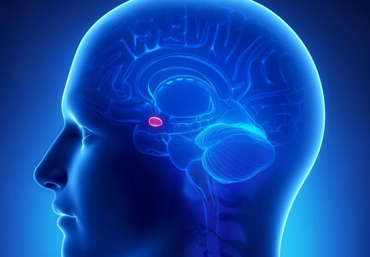 محل تولید ملاتونین در مغز
