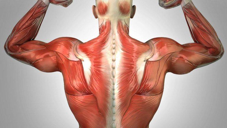 تقویت عضلات با کربوهیدرات