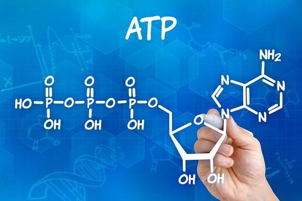 ATP و تولید انرژی